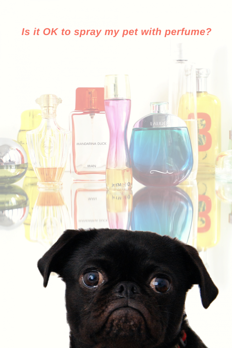 Black dog with perfume bottles in the background